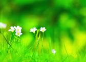 庄稼与杂草